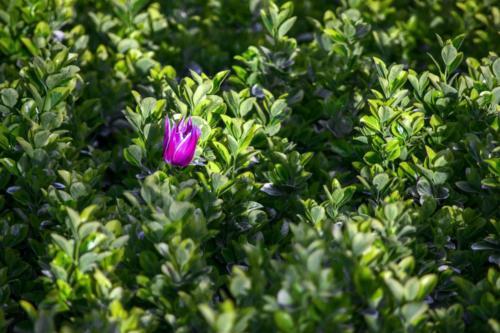 Ali Omidvar - Flower